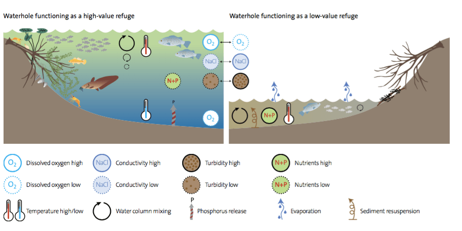 Figure 1: Function of waterholes as refuges. On the left is high-value refuge and on the right is low-value refuge.