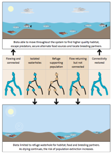 Figure 2: Spatial distribution of waterholes is key to patterns of connectivity. This is crucial to a functioning refuge; the refuge must connect back to the system in order for the biota to redistribute and