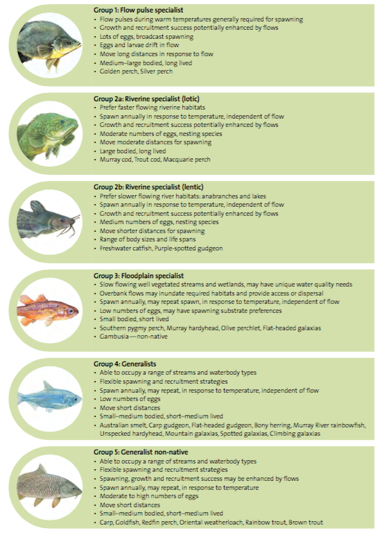 Figure 2. Functional groups of fish developed during the Fish and Flows projects, highlighting their flow-related attributes and example species.